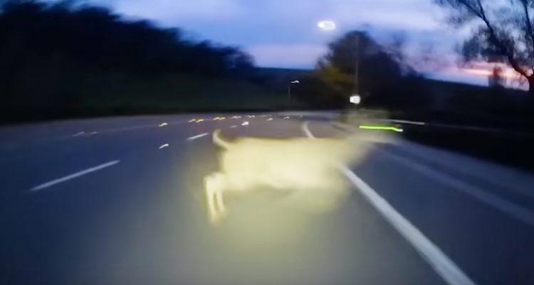 esquiva a un ciervo